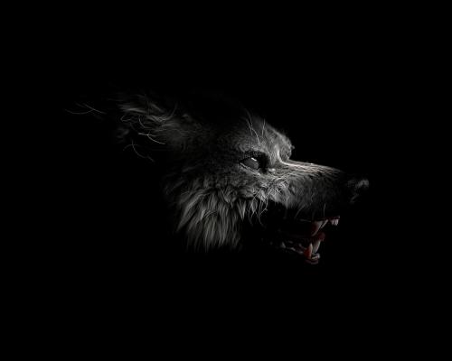 Wolf by Paul Gawman