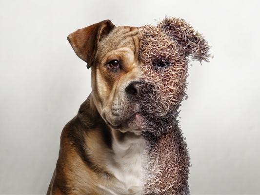 Sentinel Dog - Electric Art